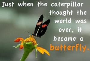 No Longer a Caterpillar